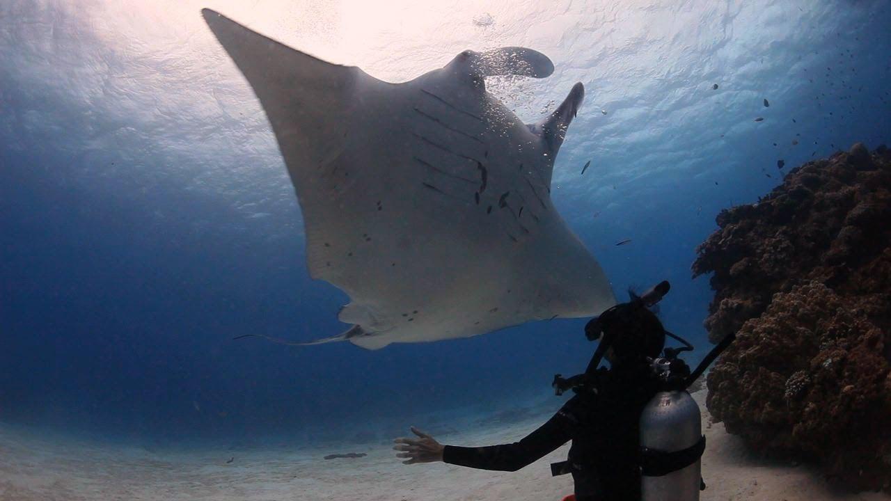 Great Barrier Reef Diving Lady Elliot Island Queensland Australia Youtube