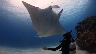 Great Barrier Reef Diving Lady Elliot Island Queensland Australia