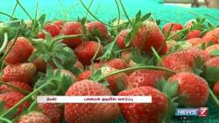 Strawberry production increases at Nilgiris  | Tamil Nadu | News7 Tamil