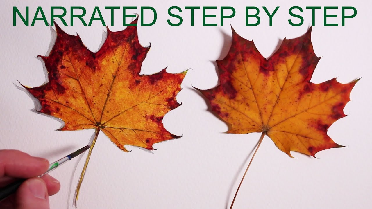 how to draw a leaf narrated step by step youtube