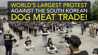 World's Largest Protest against the South Korean Dog Meat Trade!
