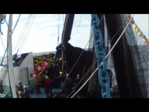 Purse Seine Fishing - Different Methods