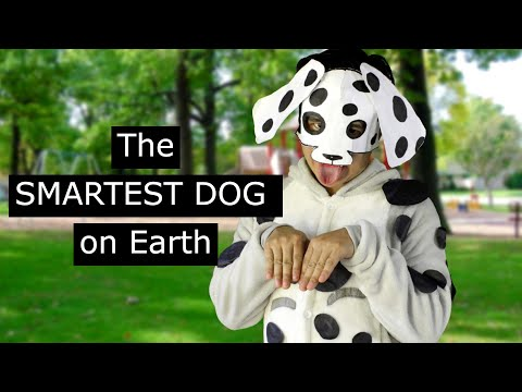 The SMARTEST DOG on Earth that can do anything EXCEPT for ONE thing