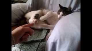 Katze kitzeln