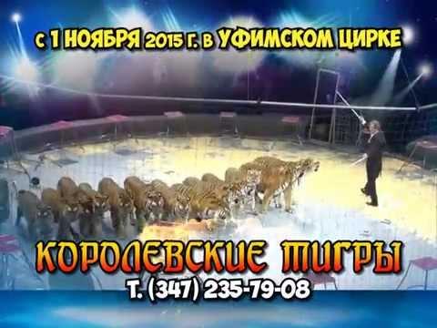 Уфимский государственный Цирк.