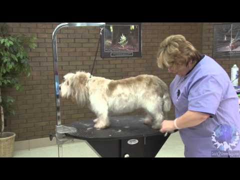 How To Groom A Pet Petit Basset Griffon Vendéen With Lisa Leady