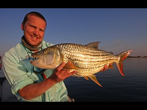 Tigerfishing - Upper Zambezi River - Zambia