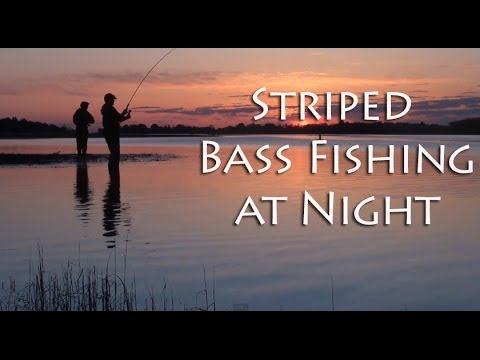 Striped bass fishing night youtube for Striper fishing at night