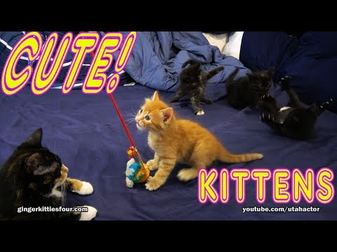 8 minutes of Cute Kittens Playing