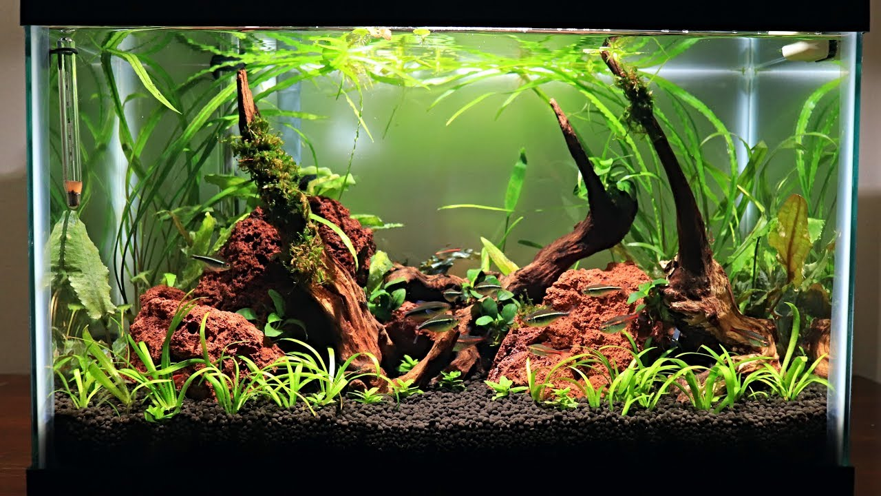 Download Easy Low Budget 10 Gallon Aquascape Update