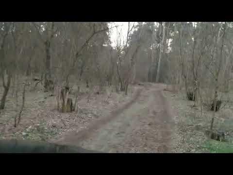 Сергей Белов: Пеньки в Балабановском лесу в рагзар отопительного сезона