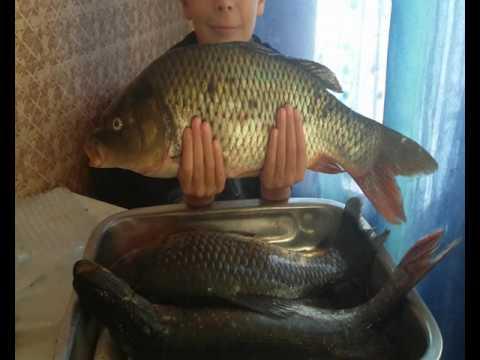 Рыба в духовке. Карась, карп, щука, запекаем в рукаве.