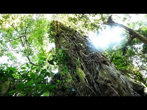 african-rainforest---sound-effects-library