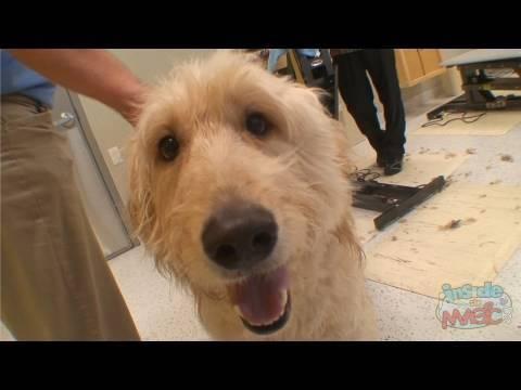Walt disney world best friends pet care grand opening for Pet boarding near disney world