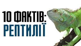 10 цікавих фактів про рептилій (плазуни)