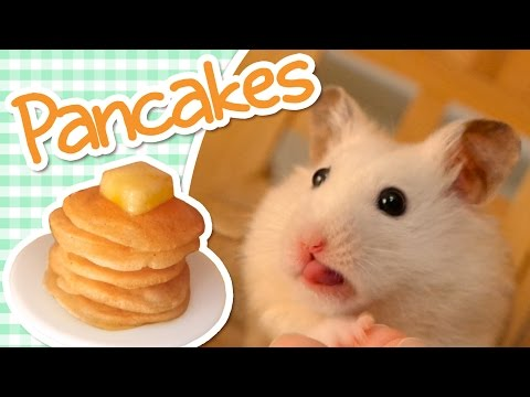 🥞 Pancakes | HAMSTER KITCHEN 🥞