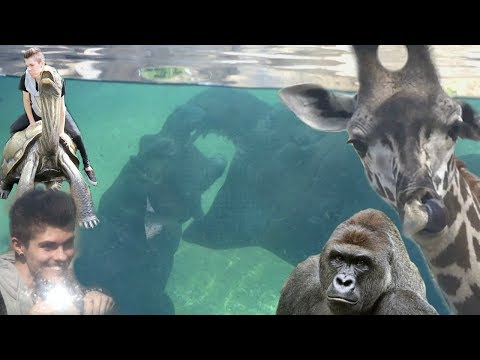 Visiting the Cincinnati Zoo! feat. Harambe & Fiona the Hippo