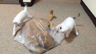 ひろし…何してるの〜〜〜〜〜? おそらくお気に入りの袋を取られないよ...