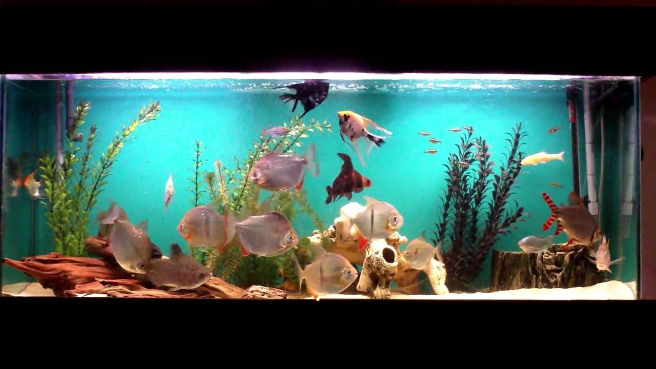 Freshwater aquarium fish oddballs - Unusual Oddball Aquarium Wide Shot