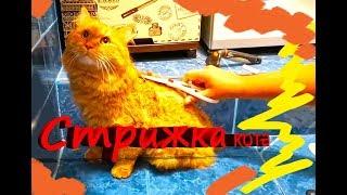 Как подстричь кота, Стрижка кошек дома, без наркоза за 20 мин, Используем только НОЖНИЦЫ!