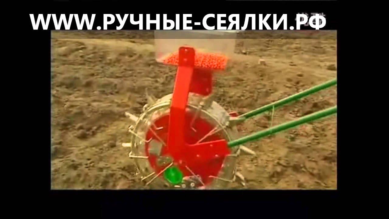 Посадка клена - как правильно посадить клён - YouTube