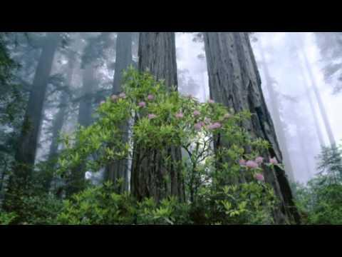Iyeoka - simply falling instrumental (karaoke)