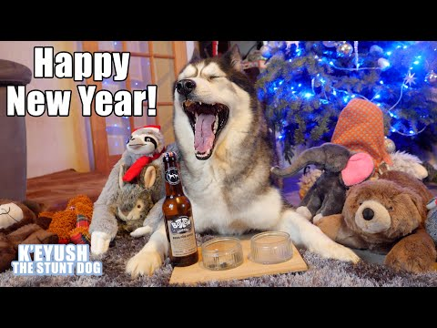 Husky Drinks Dog Beer And Argues About Resolutions!