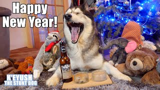 husky-makes-resolutions-and-says-happy-new-year