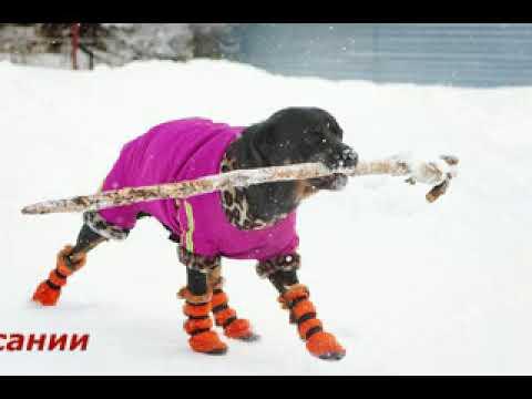 Купите интерактивную собаку с бесплатной доставкой по красноярску в интернет-магазине дочки-сыночки, цены от 799 руб. , в наличии 14 моделей интерактивных игрушек собак. Постоянные скидки, акции и распродажи. Получайте бонусные баллы за каждую покупку.