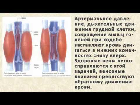 Товары из Таиланда купить в Москве. Тайские бальзамы