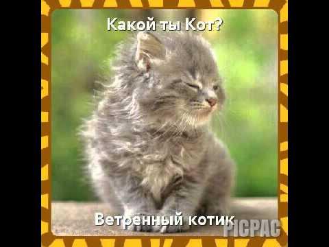 скачать игру какой ты кот - фото 8
