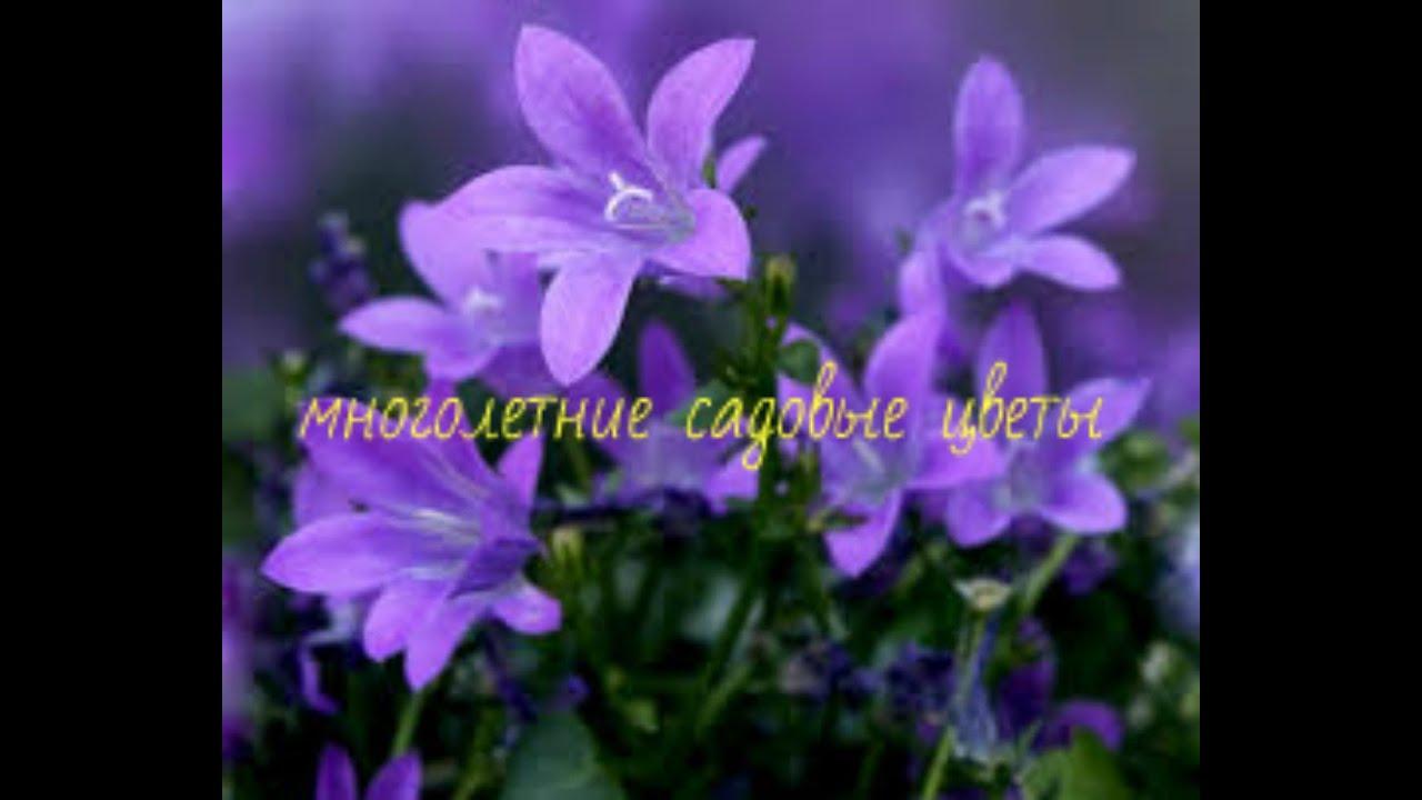 В комнатном цветке завелись мошки в земле