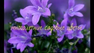 видео цветы летние садовые фото