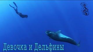 Дельфины и красивая музыка  Релакс  Для души