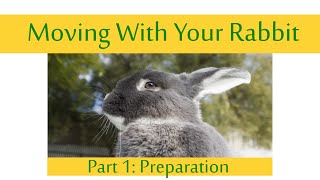 How To: Moving House with your Rabbit Part 1: Preparation