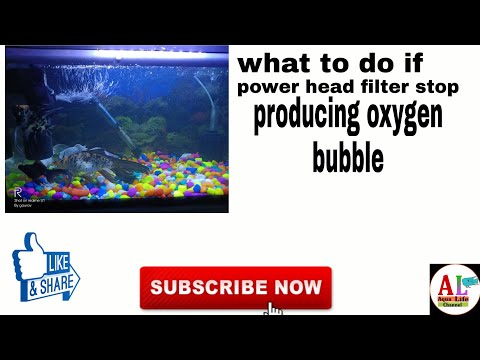 What To Do If The Power Head Filter Stop Producing Oxygen Bubble.