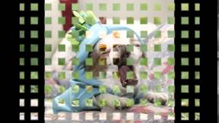 ютуб смешное видео про животных
