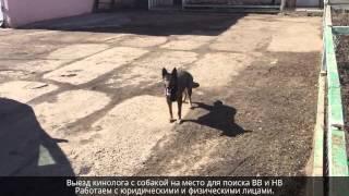 Обучение собак поиску (ВВ и НВ). Подготовка служебных собак