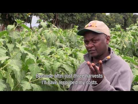Business opportunities for vegetables in Africa