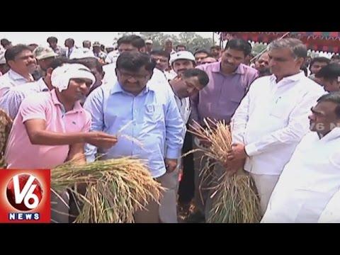 Minister Harish Rao Inspects Crops Near Singur Project | Sangareddy | V6 News
