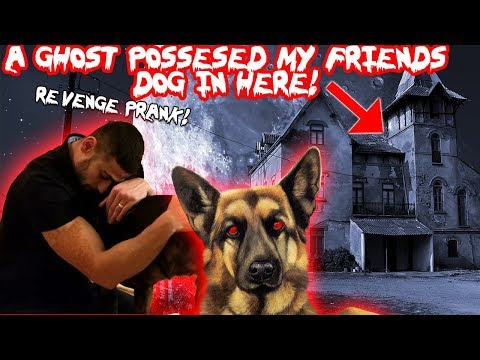 A GHOST POSSESSED MY FRIENDS DOG IN TOMS HAUNTED HOUSE! (REVENGE PRANK)   MOE SARGI