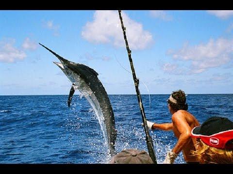 Best fishing in 2015 (Shark, Blacktip Sharks, Bull Shark...) Full HD 720p
