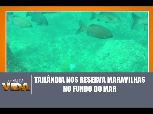 Tailândia nos reserva maravilhas no fundo do mar  - Jornal da Vida 05/01/2018