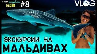 МАЛЬДИВЫ свидание с китовой акулой и др экскурсии ММБ #8(Мои Мальдивские будни # 8 АКУЛААААААА!!!!! черепаха, манта , дельфины, мурена!!! я давно собиралась сделать..., 2016-03-02T18:29:22.000Z)