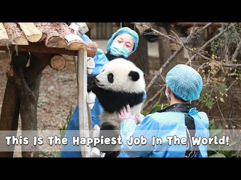 This Is The Happiest Job In The World!   iPanda