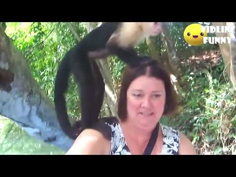 Funniest Fails In The Zoo! ¦😂¦ Try Not To Laugh Compilation 2018 95% Fail