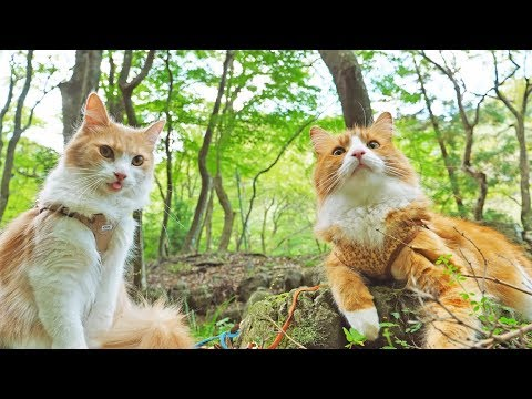 download Taking my cats for a walk
