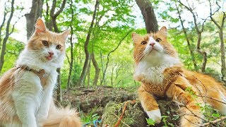 Japanese Chef Takes His Cats on an Outdoor Adventure