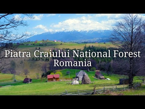 Hiking in the Piatra Craiului National Forest in Romania