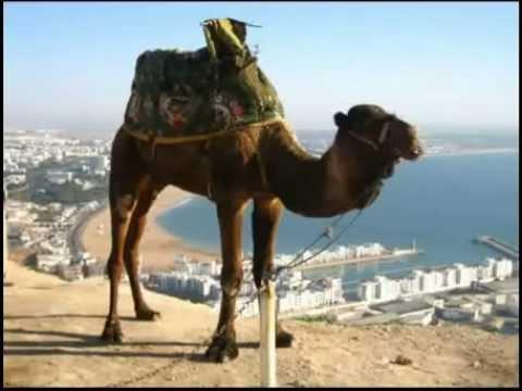 Опа опа Америка Европа На горе стоял верблюд (18+)
